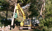 Ron Kraan Tree and Stump Removals